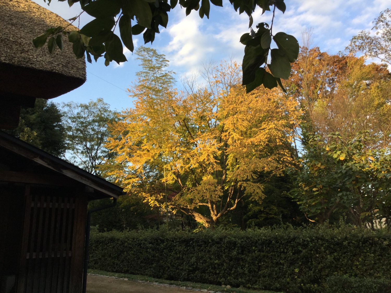 Autumn to deepen, and to go