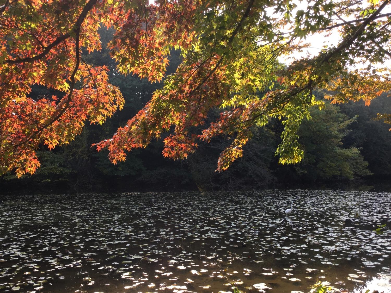 Colored leaves of three treasures Teraike