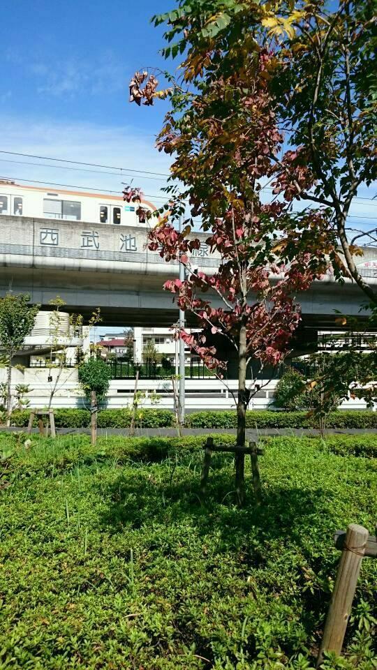 練馬的綠終於秋天具有的圖片