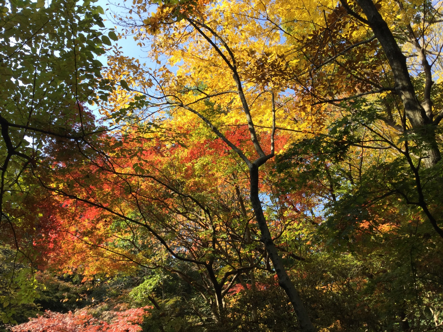 Colored leaves of commemorative garden