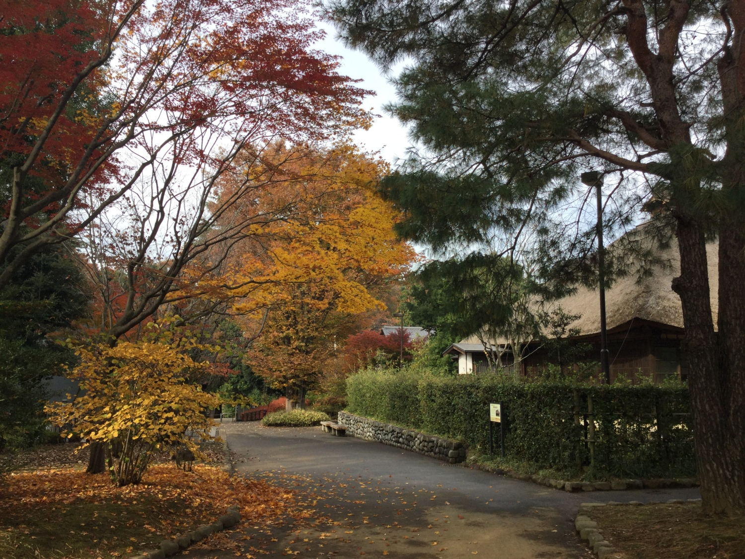 Colored leaves of the old Uchidas house