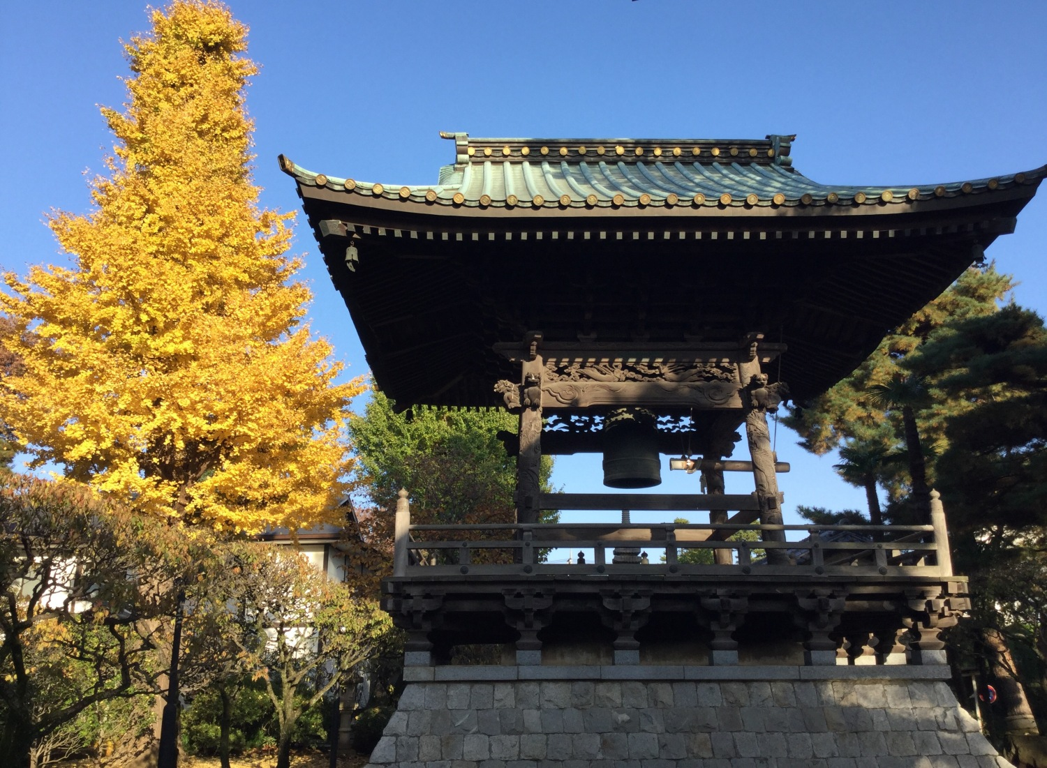 Bell tower and gingko nut