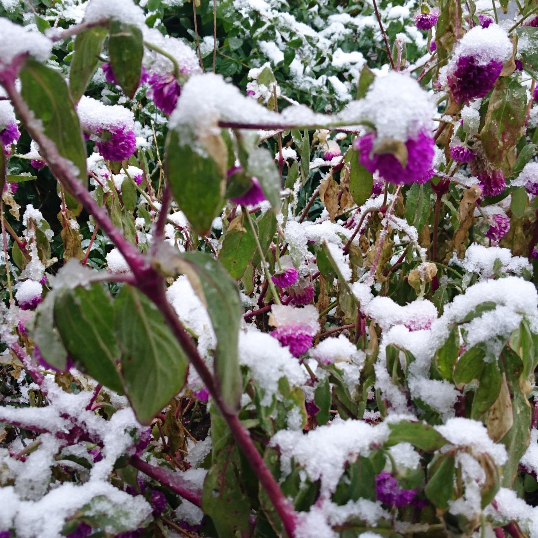 54年降rino 11月的雪