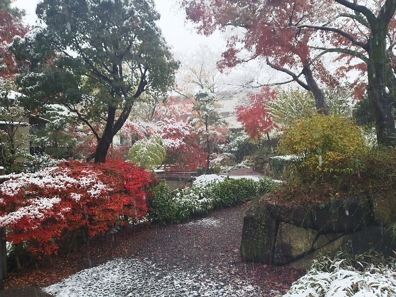 和楓葉下雪