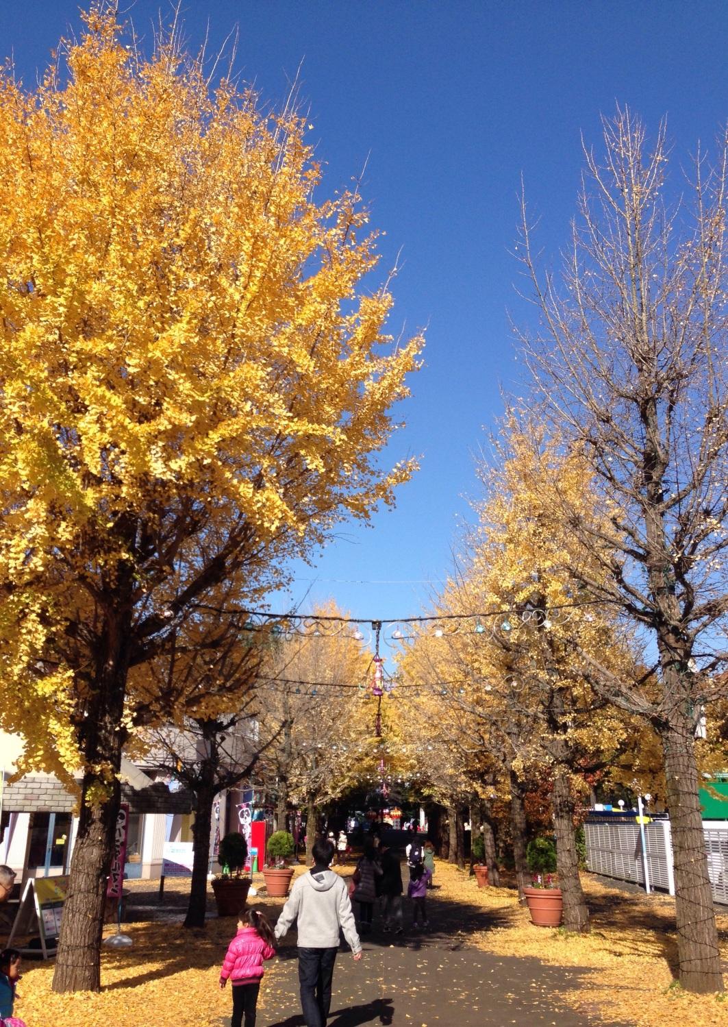 在银杏街道树走路的父亲女儿