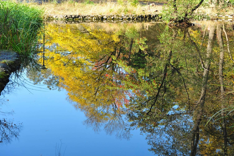 3寶貝寺池塘的楓葉