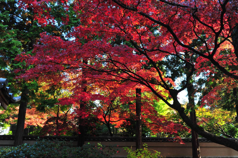 道成寺的楓葉