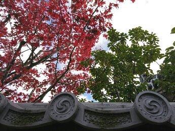 鐮倉?京都??不同。是練馬。 圖片