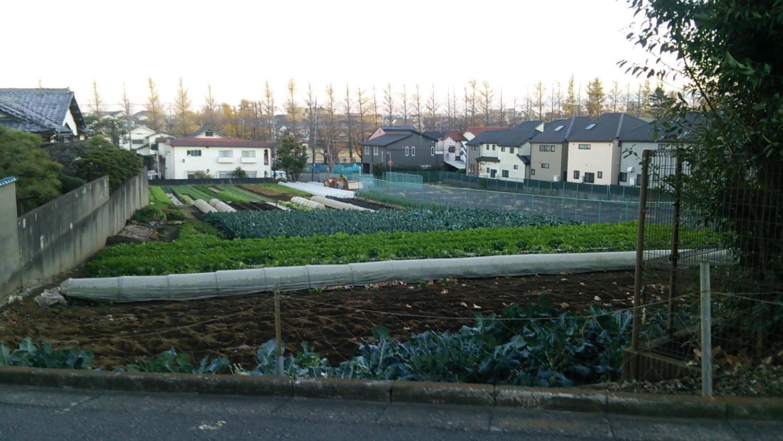 银杏看上去像的田园风景