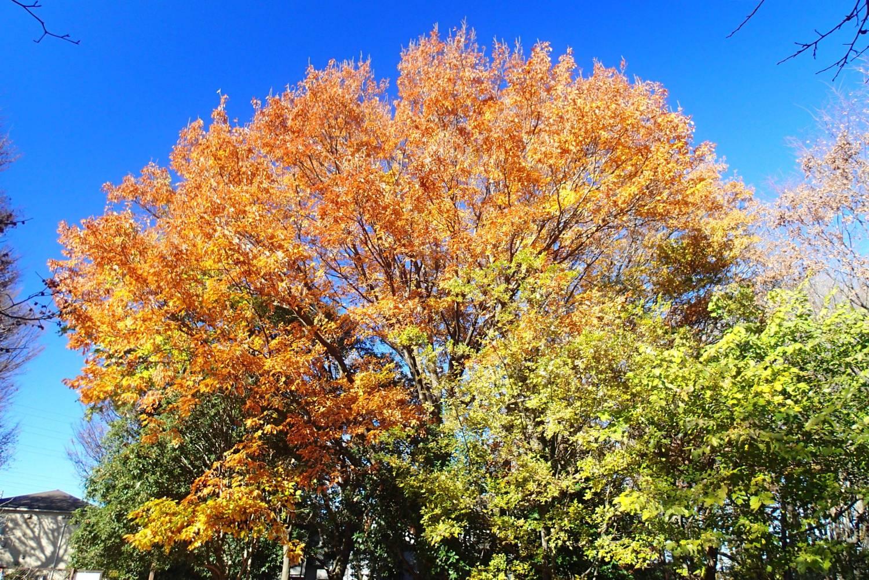 森林的秋天