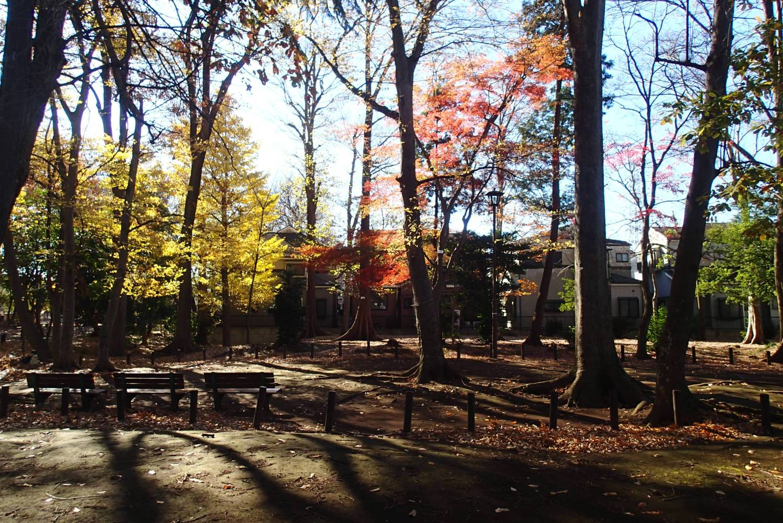 숲의 가을 이미지