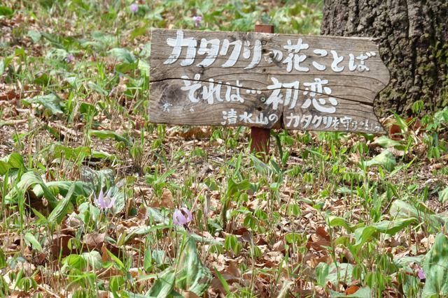 Is it destination of love of dogtooth violet? Image