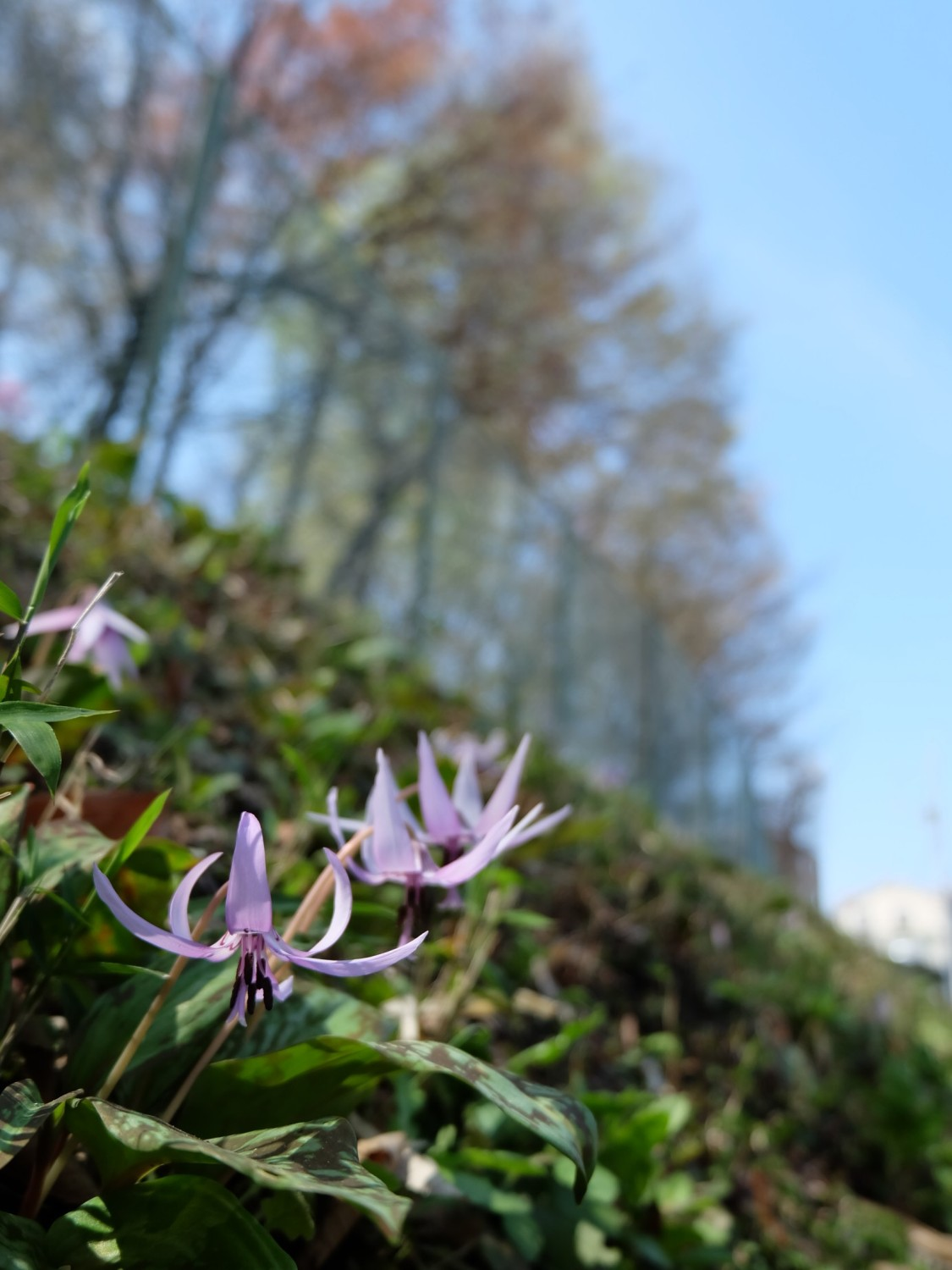 It is ... image under the dogtooth violet blue sky