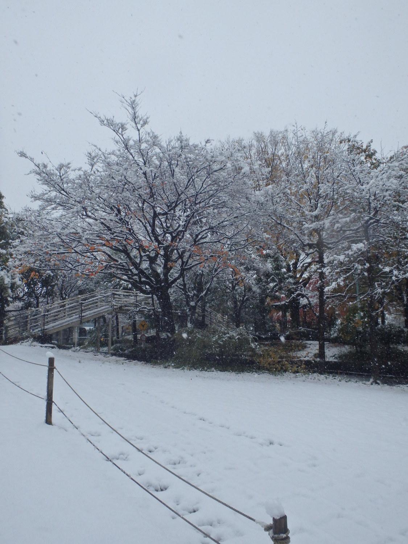 时隔54年的雪和枫叶的交通公园图片