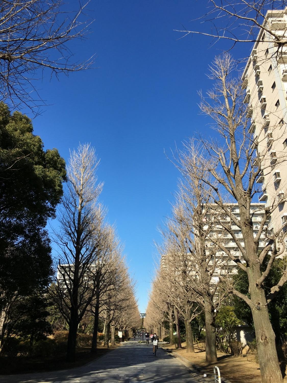 银杏街道树