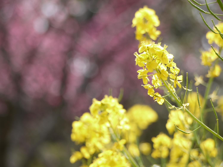 봄의 양지