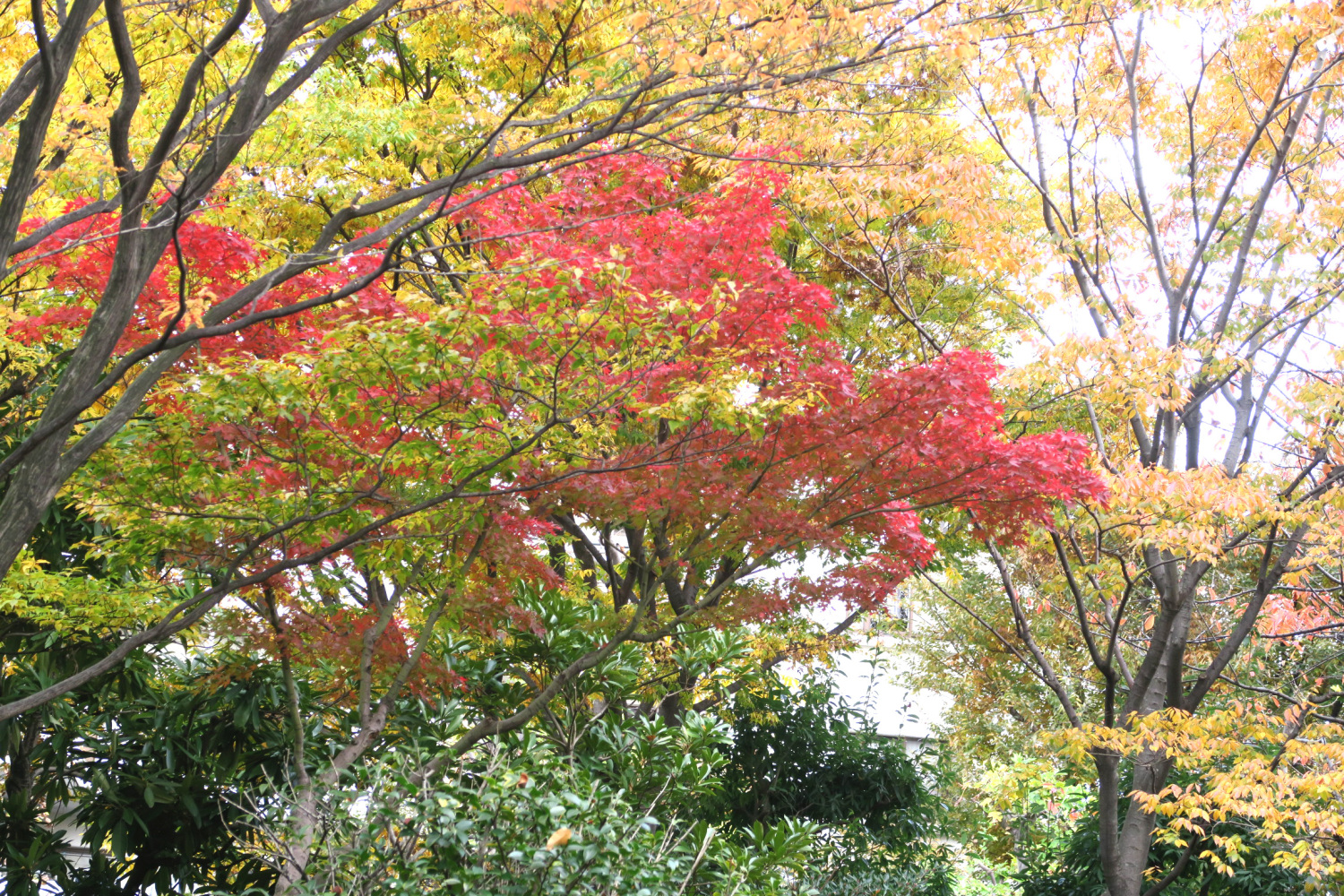 Colored leaves of garden of hotel cadenza