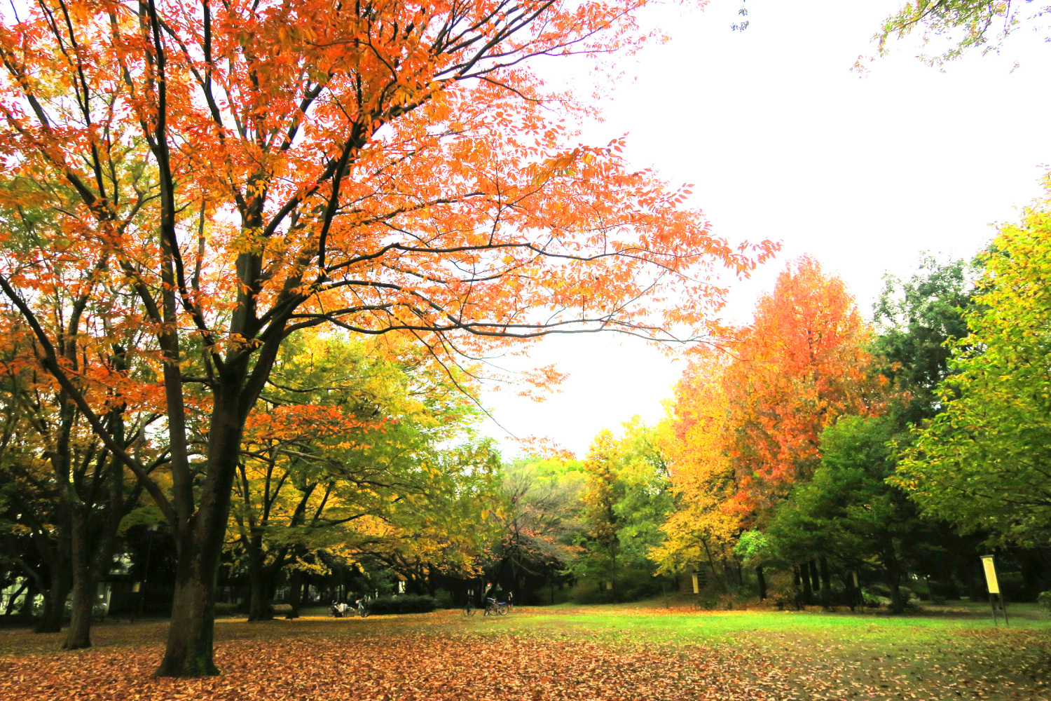 Colored leaves of Kaori Park of the four seasons