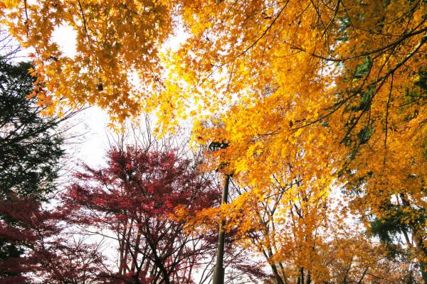 히카리가오카 공원의 단풍 이미지