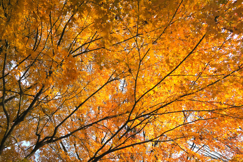 히카리가오카 공원의 단풍