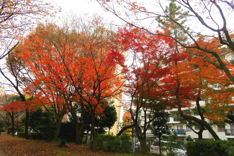봄의 바람 공원의 단풍 이미지