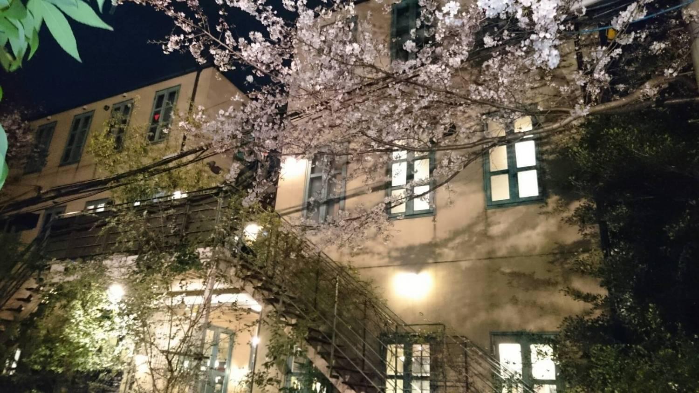奔跑著上車的夜間櫻花圖片