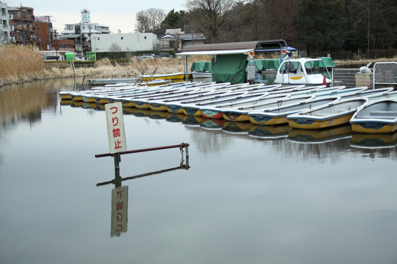 보트 연못에서 이미지