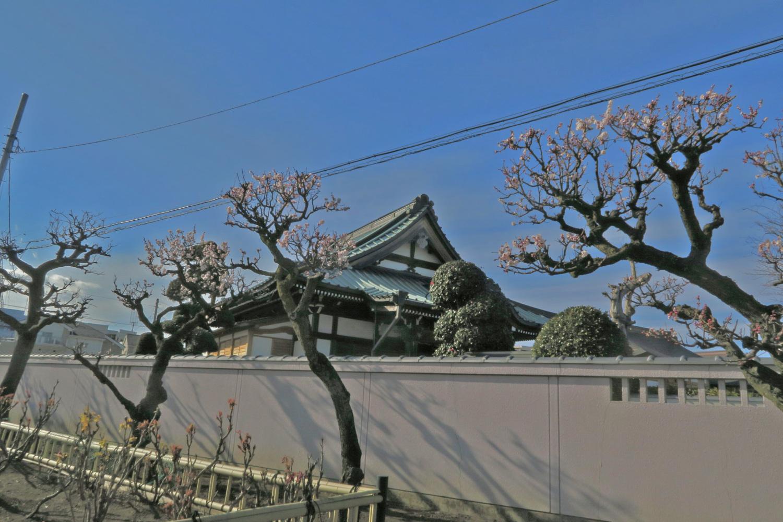 梅樹和寺廟圖片