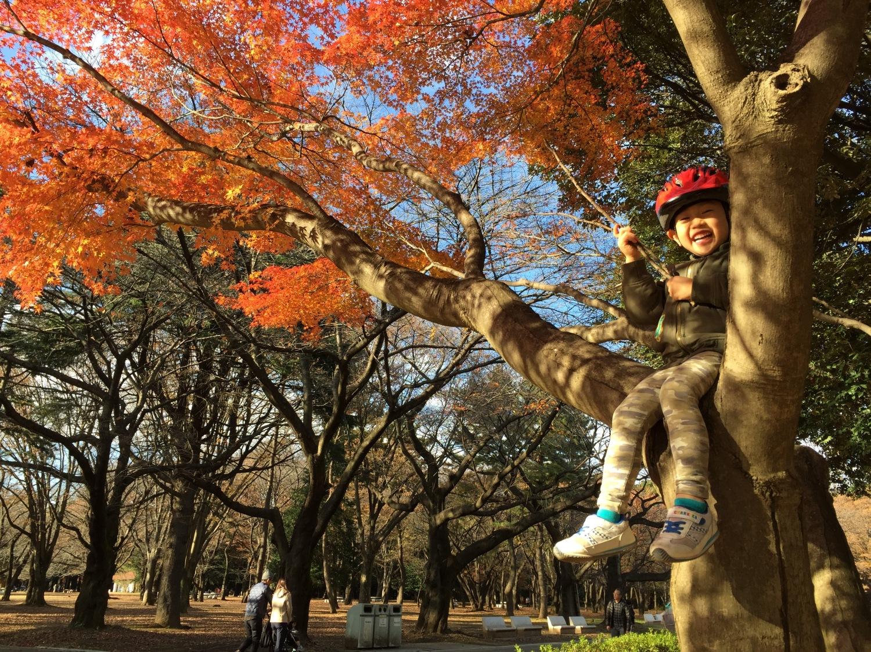 楓葉太好了的光丘公園!