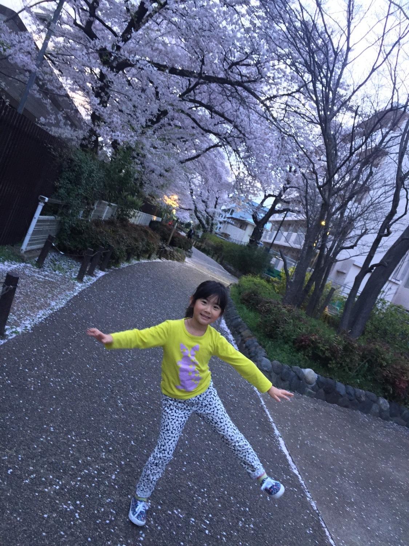 櫻花的林蔭道圖片