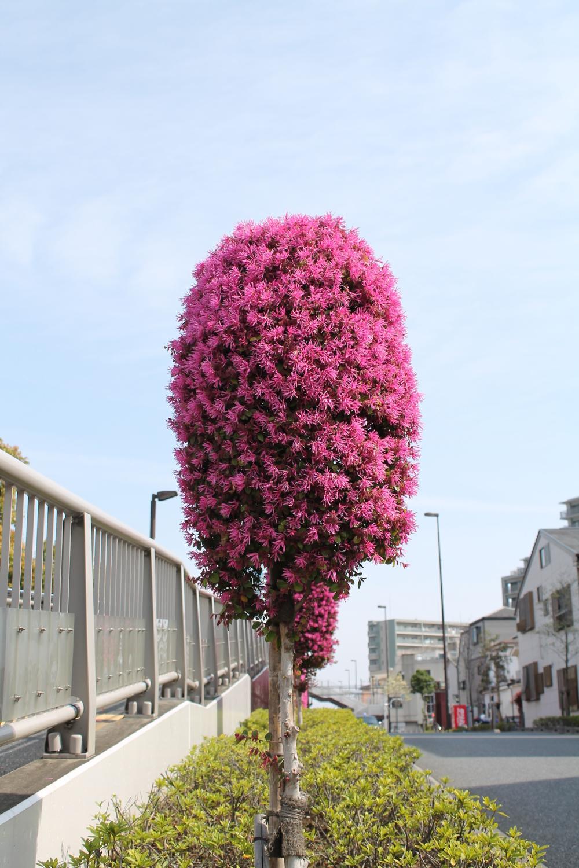 전철도 보이고 꽃도 보이는 위안의 공원 이미지