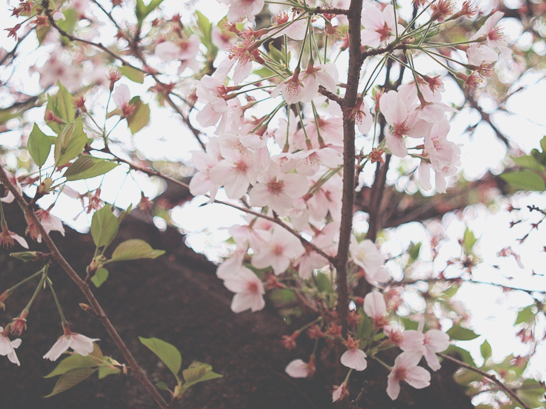 샤쿠지이의 꽃 이미지
