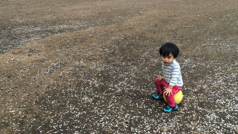 벚꽃의 꽃잎이 춤추는 히카리가오카 공원 이미지