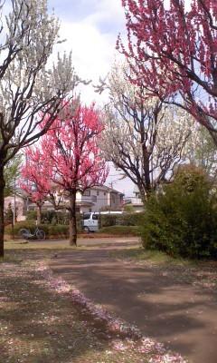 从树叶空隙照进来的阳光公园图片