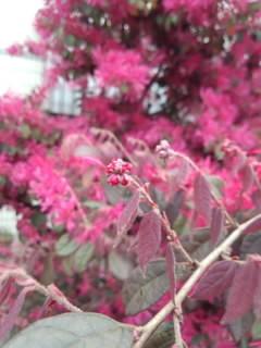 太可爱了的花的花苞…♪  No. 2图片