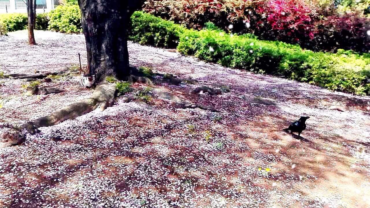 고양이와 까마귀의 꽃놀이 이미지
