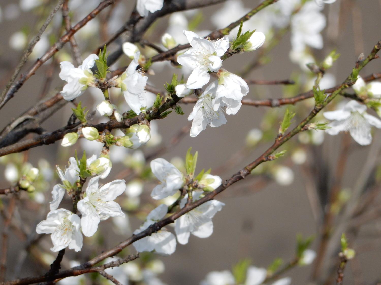 중국이라도 꽃놀이인가