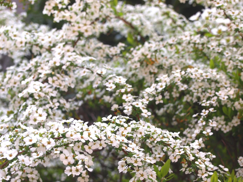 春爛漫的花