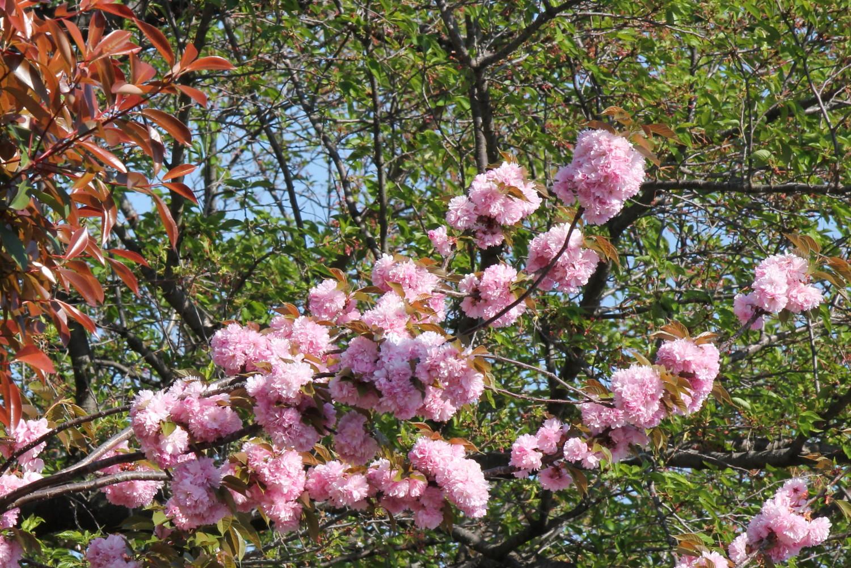 다가라 강 녹도를 장식하는 꽃