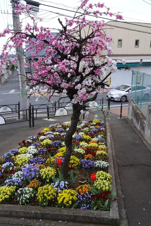 봄이 다채롭다