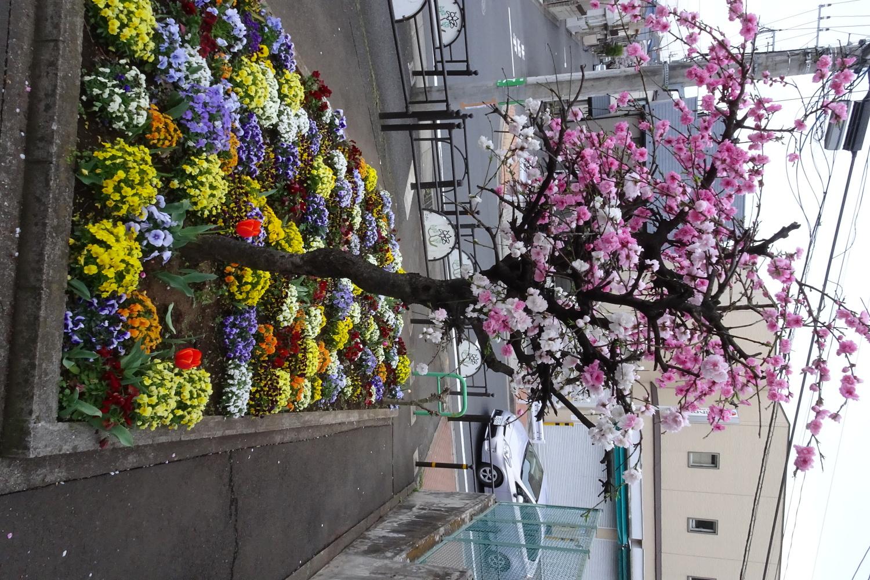 봄이 다채로운 이미지