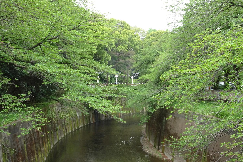 石神井川的新綠圖片
