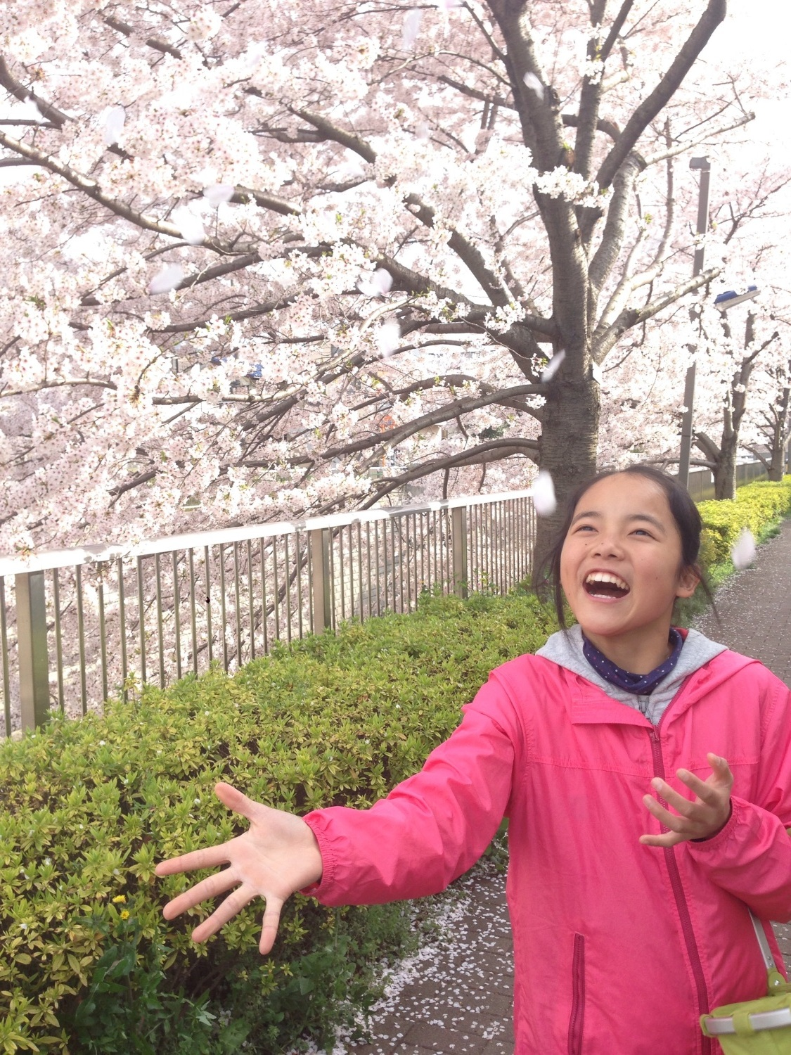 Smile that cherry blossoms bloom blooms