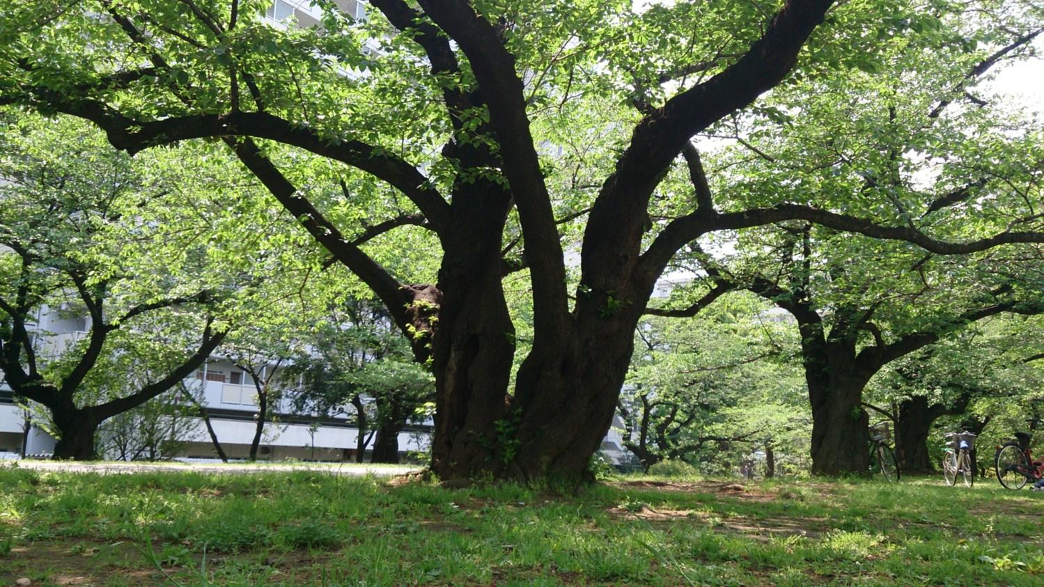 히카리가오카의 초록