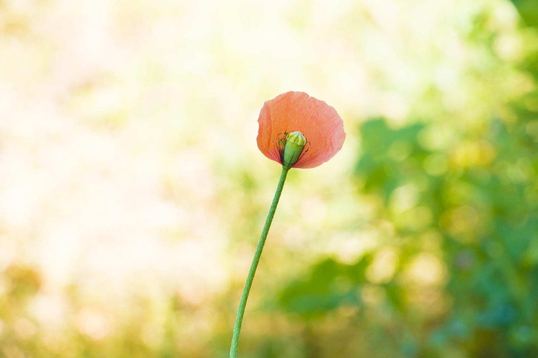 뜰에 꽃이 피었다