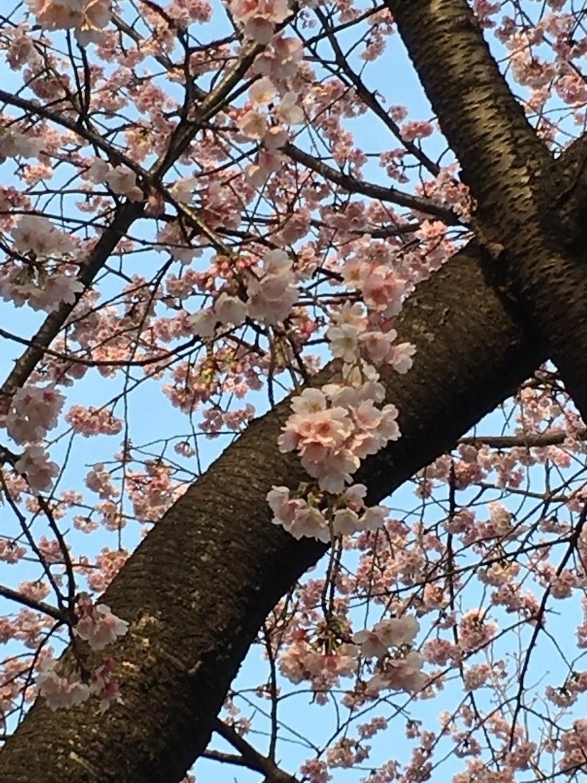 1双早的春天的访问图片