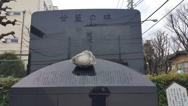 甘蓝(卷心菜)的碑图片