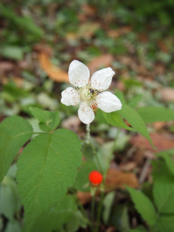 在公园的角落开放的小的花、花那个II