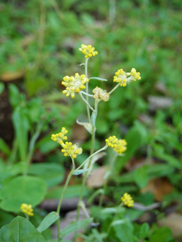 在公园的角落开放的小的花、花那个III