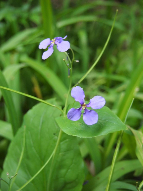 在公园的角落开放的小的花、花那个IV